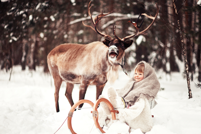 Аренда оленя на фотосессию москва